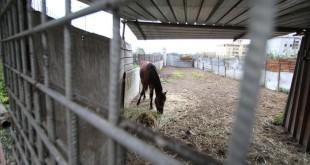 Cavalli dopati
