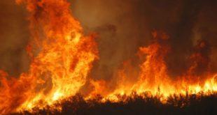 incendi - taglia sui piromani- lido